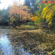 #autumn time up at #MtDandenong in the #AlfredNicholasGardens