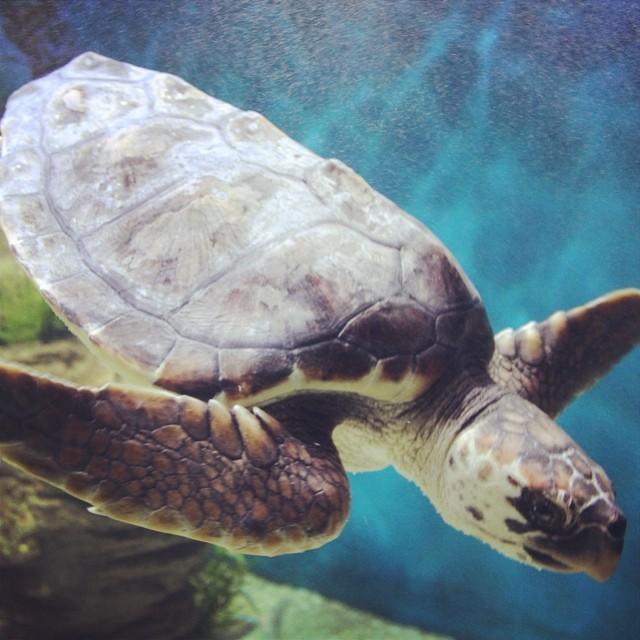 #melbourne #aquarium #melbourneaquarium