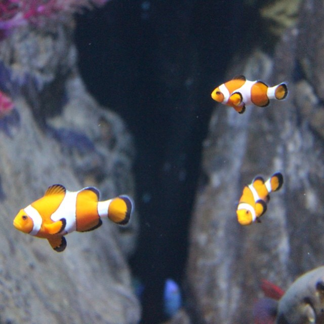 #nemo #melbourne #aquarium #melbourneaquarium