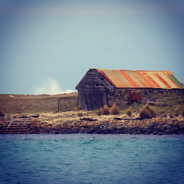 Random old shed in #tasmania